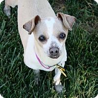 Adopt A Pet :: Colleen - Bellflower, CA