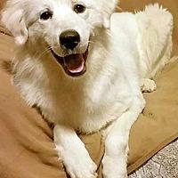 Adopt A Pet :: Ghost - Beacon, NY