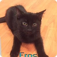 Adopt A Pet :: Eros - Anaheim Hills, CA