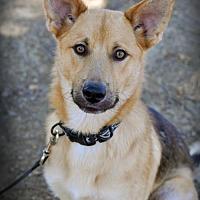 Adopt A Pet :: Johnny - Milpitas, CA