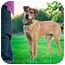Photo 2 - German Shepherd Dog/Hound (Unknown Type) Mix Dog for adoption in West Richland, Washington - Gunny