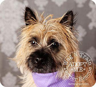 Cairn Terrier Dog for adoption in Omaha, Nebraska - Cassie