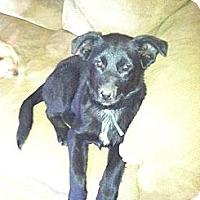 Adopt A Pet :: Katrina - Albany, NY