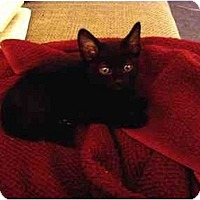 Adopt A Pet :: Bosco - Davis, CA
