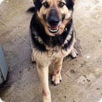 Adopt A Pet :: Stanley - Leetonia, OH