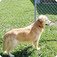 Adopt A Pet :: Jeffrey - Murdock, FL