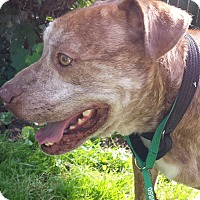 Adopt A Pet :: Zane - North Tonawanda, NY