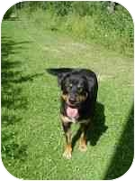 Rottweiler Mix Dog for adoption in Athabasca, Alberta - LONDON