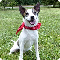 Adopt A Pet :: Thomas - Mocksville, NC