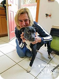 Labrador Retriever/Boxer Mix Dog for adoption in Northville, Michigan - zLulu - ADOPTED
