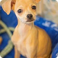 Adopt A Pet :: Jezebel Jones - Millersville, MD