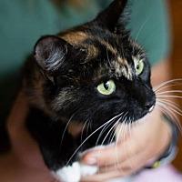 Adopt A Pet :: Sylvia - Athens, GA