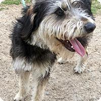 Adopt A Pet :: Annie II - Quinlan, TX