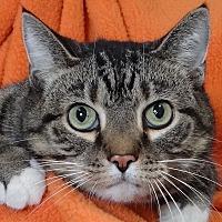 Adopt A Pet :: Meepy - Renfrew, PA