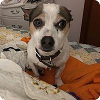 Adopt A Pet :: Bobby - House Springs, MO