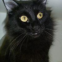 Adopt A Pet :: Santana - Hamburg, NY