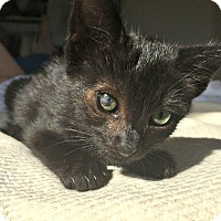 Adopt A Pet :: Beatrice is only 8 weeks old! - Redondo Beach, CA