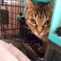 Adopt A Pet :: Dinah - Simcoe, ON