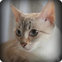 Adopt A Pet :: Ada - Staunton, VA