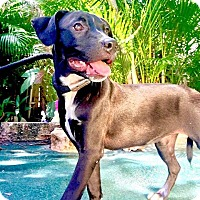 Adopt A Pet :: Vita - West Palm Beach, FL