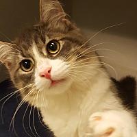 Adopt A Pet :: Kumar - Grayslake, IL