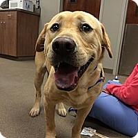 Adopt A Pet :: Lester - Cumming, GA