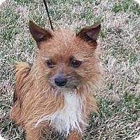 Adopt A Pet :: Dante - Brattleboro, VT