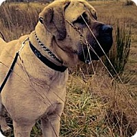 Adopt A Pet :: OTIS - Kingston, WA
