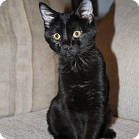 Adopt A Pet :: Brinley - Clearfield, UT