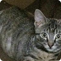 Adopt A Pet :: Pascal - New York, NY