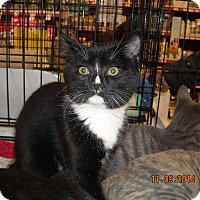 Adopt A Pet :: Leena - Riverside, RI