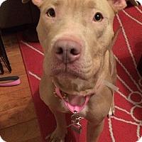 Adopt A Pet :: Mochi - New York, NY