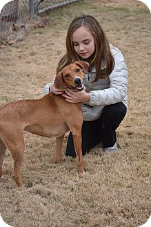 Labrador Retriever Mix Dog for adoption in Greenfield, Wisconsin - Bella