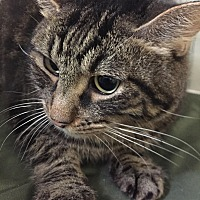Adopt A Pet :: Tiny - Orlando, FL