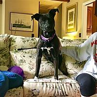 Adopt A Pet :: Eva - Nanuet, NY