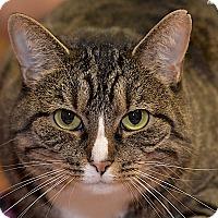 Adopt A Pet :: Riley - Medina, OH