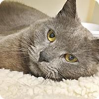 Adopt A Pet :: Moana - Salisbury, MA