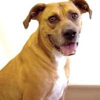 Adopt A Pet :: Toby - Fort Dodge, IA