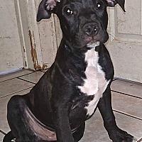 Adopt A Pet :: Newton - San Diego, CA