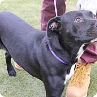 Adopt A Pet :: Lucy Lou - Greensboro, NC