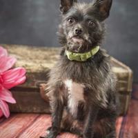 Adopt A Pet :: Peanut - Waco, TX