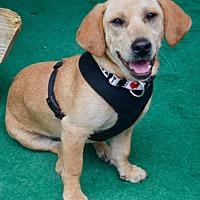 Adopt A Pet :: Carl - Charlotte, NC