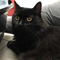 Adopt A Pet :: Pixie - Naugatuck, CT