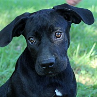 Adopt A Pet :: Bandito - Southbury, CT
