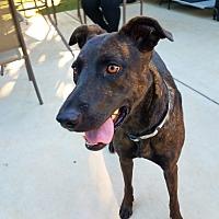 Adopt A Pet :: Xena - Saugus, CA