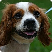 Adopt A Pet :: Harold - Cantonment, FL