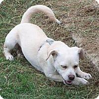 Adopt A Pet :: Powder Wilder - Southampton, PA
