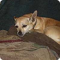 Adopt A Pet :: Honey - Morristown, TN