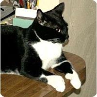 Adopt A Pet :: Lacey - like little dog - Scottsdale, AZ