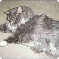 Adopt A Pet :: Parker - Strathmore, AB